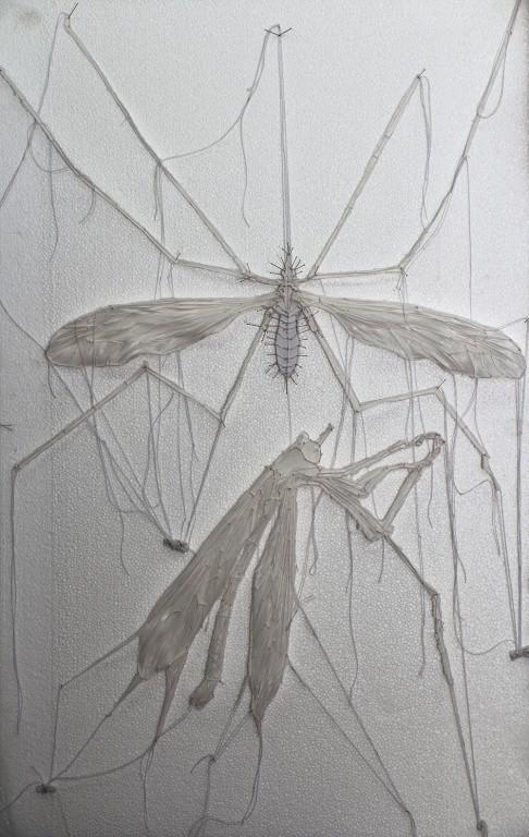 חרקים 4