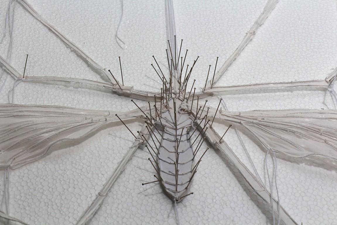 חרקים 5